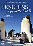 Penguins - Spy in the Huddle [DVD] [Import anglais]