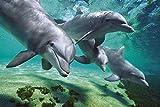 Dolphins Underwater Tier-Poster Delfine Meer 91,5x61 cm + 1 Ü-Poster der Grösse 61x91,5cm
