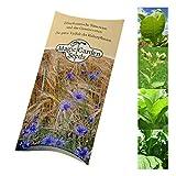 Samen-Geschenkset: 'Pfeifentabak', 3 Tabaksorten zur Herstellung von aromatischen Pfeifentabak