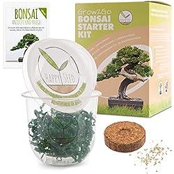 GROW2GO Bonsai Kit avec eBook GRATUIT - Bonzai Set avec mini-serre, graines et terre - idée cadeau durable pour les amoureux des plantes (Pin Australien)
