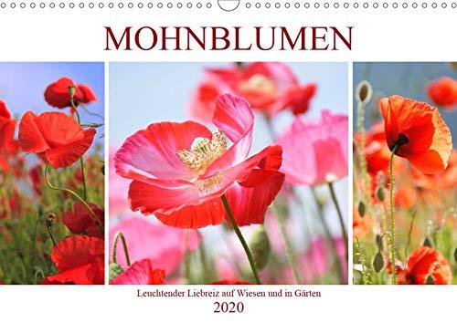 Mohnblumen. Leuchtender Liebreiz auf Wiesen und in Gärten (Wandkalender 2020 DIN A3 quer)