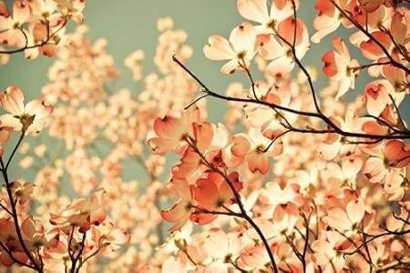 impresion-de-arte-fino-en-lienzo-pink-pic-by-st-clair-olivia-joy-pequena-91-x-61-cms