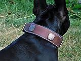 Lederhalsband Zeuss Braun Conchos Breit weich unterlegt M L XL Tysons Leder Halsband (L)