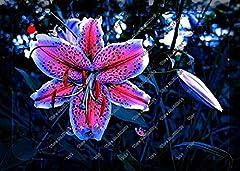 Idea Regalo - 200pcs / bag rari semi del giglio, non bulbi di giglio, è seme, semi di fiori di giglio bonsai, fragranza piacevole, impianti per la casa e il giardino