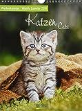 Katzen 2019: Foto-Wochenkalender