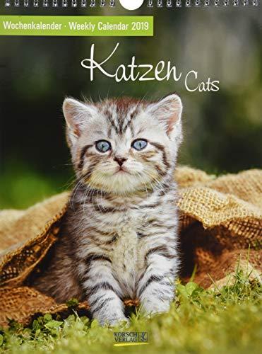Katzen 2019 Foto-Wochenkalender