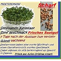 Crescione Senape Piantine senape Seme Semi di germe velocemente in crescita Erbe Neu 8 g (Rose Garden Di Bambù)
