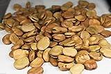 50 graines Fève, Aquadulce (Vicia faba) Alias, gourganes, Hardy, fiable et polyvalent