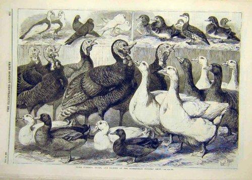 Geflügel Profi-Birmingham-1869-geeignet Tauben-Enten -