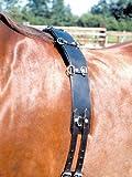 Longiergurt Leder 12 Ring, schwarz | Lederlongiergurt | Pferd longieren AKTION