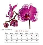 Edizioni-White-Star-Fiori-Calendario-da-Tavolo