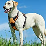 Hundegeschirr Geschirr für große kleine mittlere Hunde No Pull Welpengeschirr Anti Zug Ring Vorne Dog Harness Brustgeschirr Ausbruchsicher Sicherheitsgeschirr Sport Soft Training Atmungsaktiv Orange XL