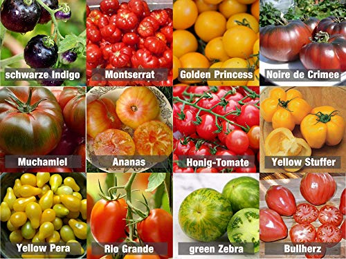 Tomaten-Mix/Samen-Set 12 x 10 Samen 100{b58845172a056acc7c4796c386db613ab63ace5a4b3f5d1402473463284d65a0} Natursamen aus Portugal seltene Sorten mit sehr hoher Keimrate Bullenherz Noiree de Crimee Cocktail-Tomaten