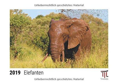 Elefanten 2019 - Timokrates Tischkalender, Bilderkalender, Fotokalender - DIN A5 (21 x...