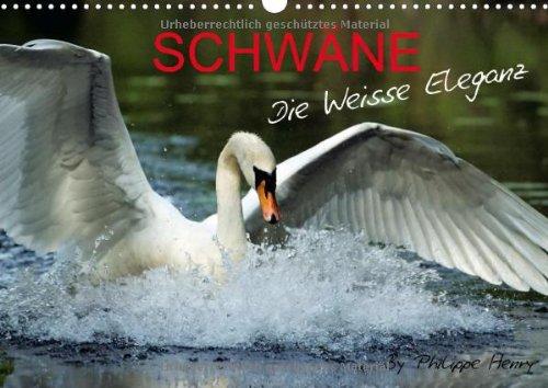 schwane-schwane-a3-quer
