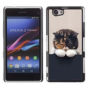 PC/Aluminum Hartschale Schutzhülle Tasche Hülle für Sony Xperia Z1 Compact D5503 Cute Sleepy Kitten Cat Pet Feline Paw / JUSTGO PHONE PROTECTOR
