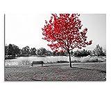 120x80cm Leinwandbild auf Keilrahmen Park Bank Teich schwarz weiß Baum rote Blätter Wandbild auf Leinwand als Panorama