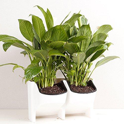 Lan Pflanzenwand, Vertikale Begrünung Innen- und Außen Balkon Wand-Kombi-Blumentopf Kreative Pflanze Hintergrund Wand Großhandel: weiß 3pcs