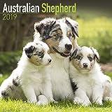 Australian Shepherd Calendar 2019