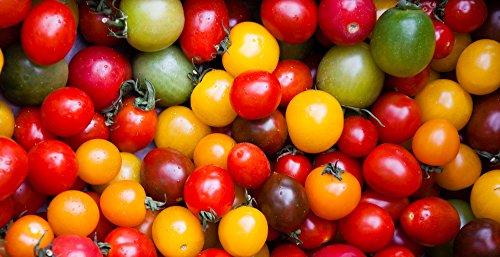 Kirschtomaten 20 Samen 'Regenbogen-Mix' Cherry-Tomate -Alle Farben in einem Paket, klein, aromatisch und süß (Tomato Rainbow)