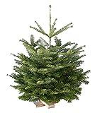 Echter Weihnachtsbaum Nordmanntanne mit Holzkreuz H=ca. 0,80-0,95 m Premium frisch geschlagen