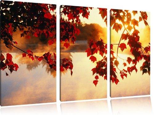 L'érable rouge dans la lumière du soleil, 3-pièces de toile 120x80 image image sur la toile, énorme XXL Photos complètement encadrée avec civière, art impression sur murale avec cadre, gänstiger comme la peinture ou la peinture à l'huile, aucune affiche ou un poster