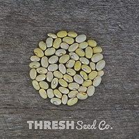 PlenTree Bombardeos Bean (Bush) - Hutterite sopa de alubias - 50 semillas + Free regalo