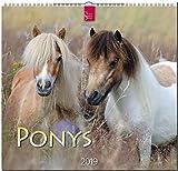 MF-Kalender PONYS 2019