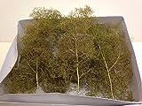 WWS Mittlerer Seafoam Seeschaum-Baum