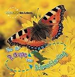 Von der Raupe zum Schmetterling, Kreislauf des Lebens - Camilla de la Bédoyère