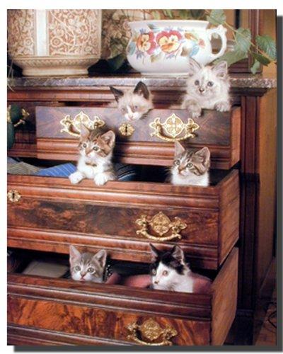 Lustige Katzen-Kätzchen in Schubladen, Motiv Tier-Poster/Kunstdruck (40 x 50)