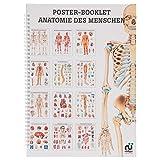 Anatomie des Menschen Mini-Poster Booklet Anatomie 34x24 cm, 12 Poster