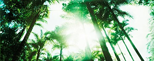 Palm Costa Rica (Panoramic Images – Low angle view of palm trees Arenal Region Costa Rica Photo Print (91,44 x 30,48 cm))