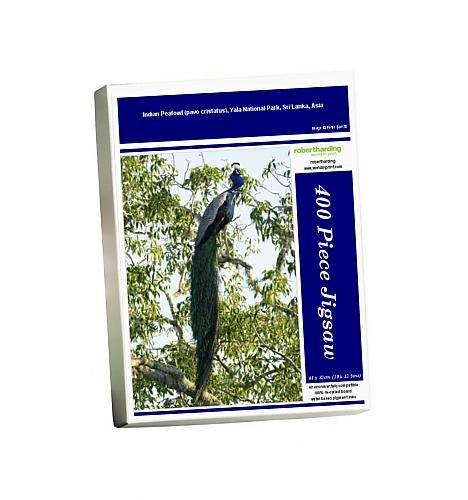 photo-jigsaw-puzzle-of-indian-peafowl-pavo-cristatus-yala-national-park-sri-lanka-asia