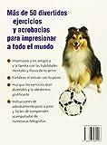Image de Haz de tu perro una estrella con el clicker: Divertidos ejercicios para HTM y Freestyle