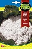 Semillas Fitó 1236 - Semillas de Coliflor Montalba