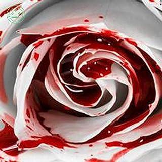 Portal Cool Rarest Weiß Blut-Rosen-Pflanze Blumensamen Blumengarten Asaka Rare True Blood R