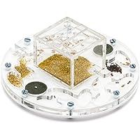 Fourmiliere Ant Farm Circle Medium (Fourmis et reine gratuites)