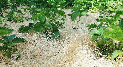 Gartenholzwolle Erdbeerholzwolle Holzwolle für Landwirtschaft 2kg