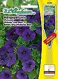 Hängepetunie ' Erfordia® Lady Blue' F1 , Pillensaat, beliebt, lang anhaltende Blüte , blau ( mit Stecketikett) 'Petunia grandiflora pendula'