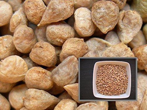 Epinard Noorman - 3 grammes - Spinacia Olerecea L. - Spinach - SEM02