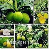 Pinkdose Famiglia Artocarpus incisa Bonsai, Piante Ornamentali Frutta Bonsai, Frutta Tropicale Jackfruit Tree Frutta pianta Spedizione Gratuita 5 PZ