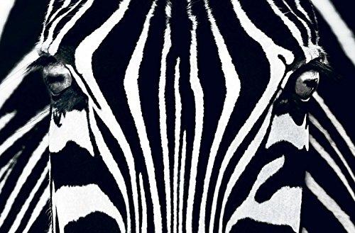 Fototapete BLACK AND WHITE 175x115 schwarz weiss Foto, Zebra, afrikanisch, mystischer Kunstdruck Black Zebra Illusion