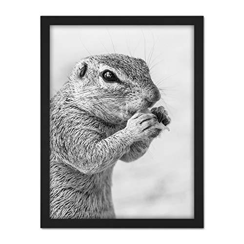 Squirrel Rodent Eating Black White Animal Photo Artwork Framed Wall Art Print 18X24 Inch Tier Fotografieren Wand - Fine-art-tier-artwork