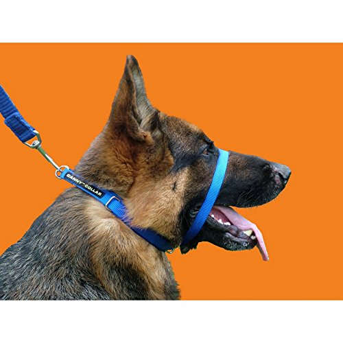 Canny Halsband Blue Gr��e 3 Dog Head Halsband stoppt ziehen Training -