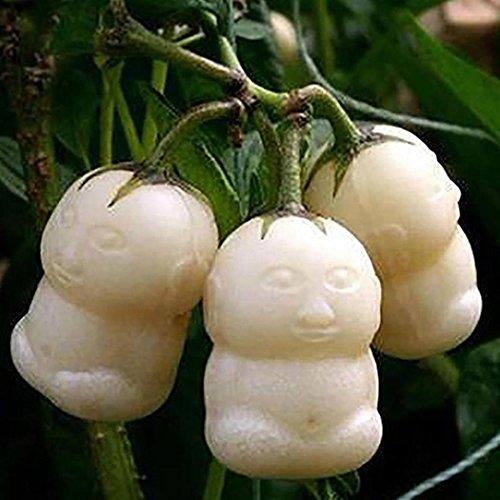 Ncient 20/50 Unids Semillas Fruta de Ginseng Semillas Frutas Puro Vegetal Natural y Orgánico Saludable de Plantas Bonsai para Maceta Jardín Balcon Interior y Exteriores Fruta de Ginseng