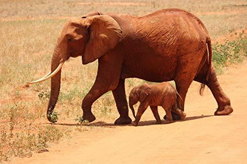 Puzzles De 1000 Piezas Animal Dos Elefantes.Mejor Regalo Para Niños O Amigos,...