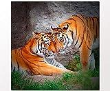 Berger Designs Tierbild Tiger's couple 80x80 cm auf Leinwand und Holzkeilrahmen - Beste Qualität, handgefertigt in Deutschland