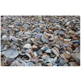 Duang Tappeto Area Cozze Spiaggia Sabbia Mare del Nord Mare Zerbino per Vacanze Tappeto per Interni Tappeto Tappetino