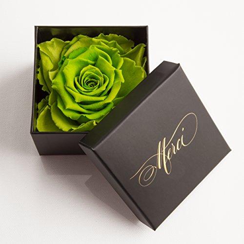 Konservierte Rose 3 Jahre haltbar Geschenkbox Danksagung Rosengesteck von ROSEMARIE SCHULZ® (Merci !) (Grün)